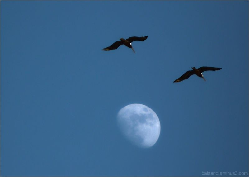 and the birds jumped over the moon