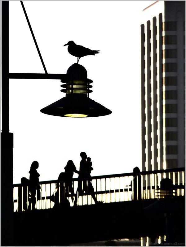 bird, bridge, boys, babes
