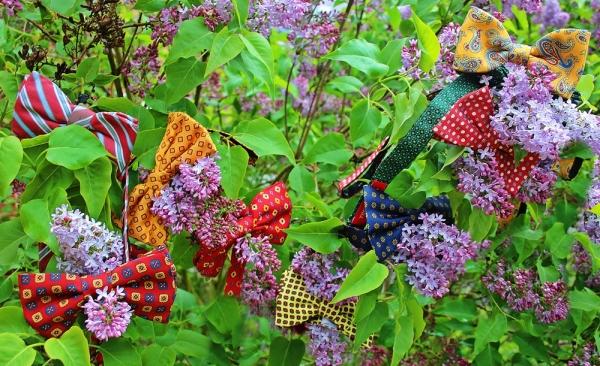 papillons printemps