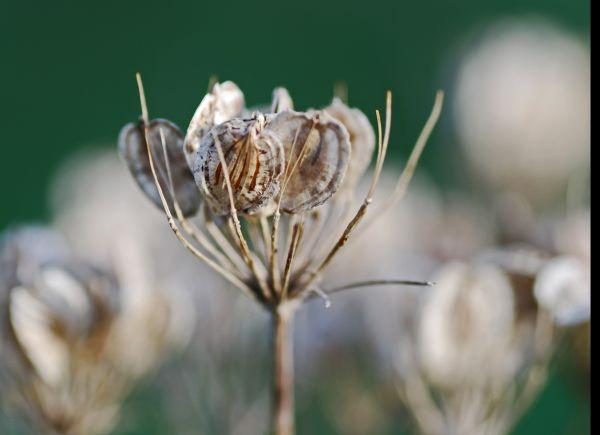 Seeds 2