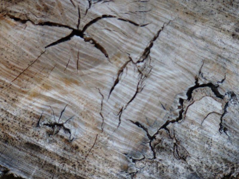 Wood stories