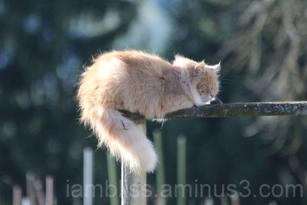 Balancing nap