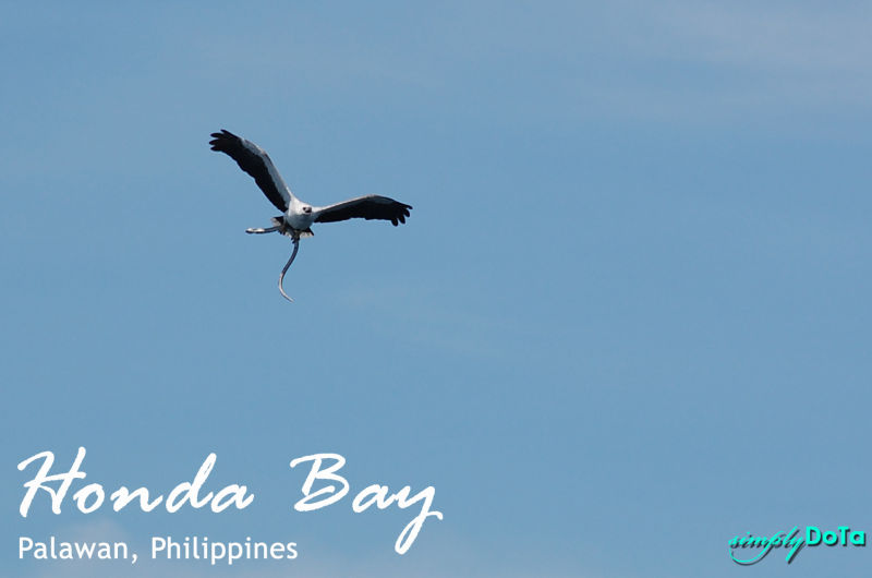 eagle, honda bay, palawan, philippines