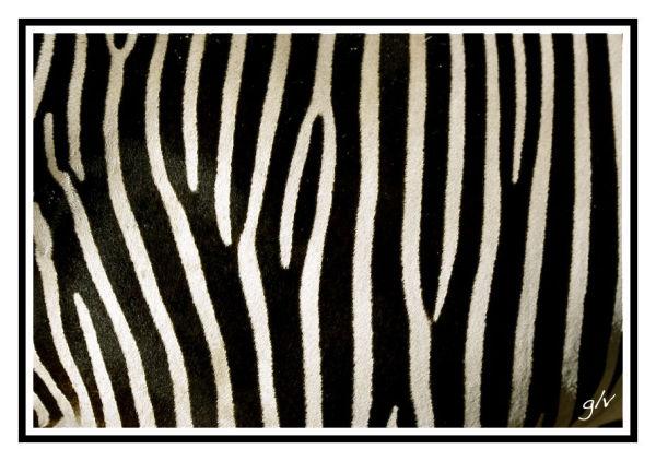 Un monde en couleurs - Noir & Blanc I