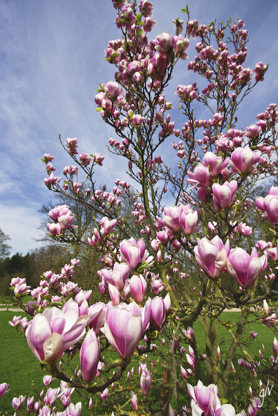 Un monde fleuri / a flowery world (14)