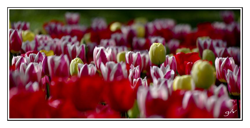 Un monde fleuri / a flowery world (17)