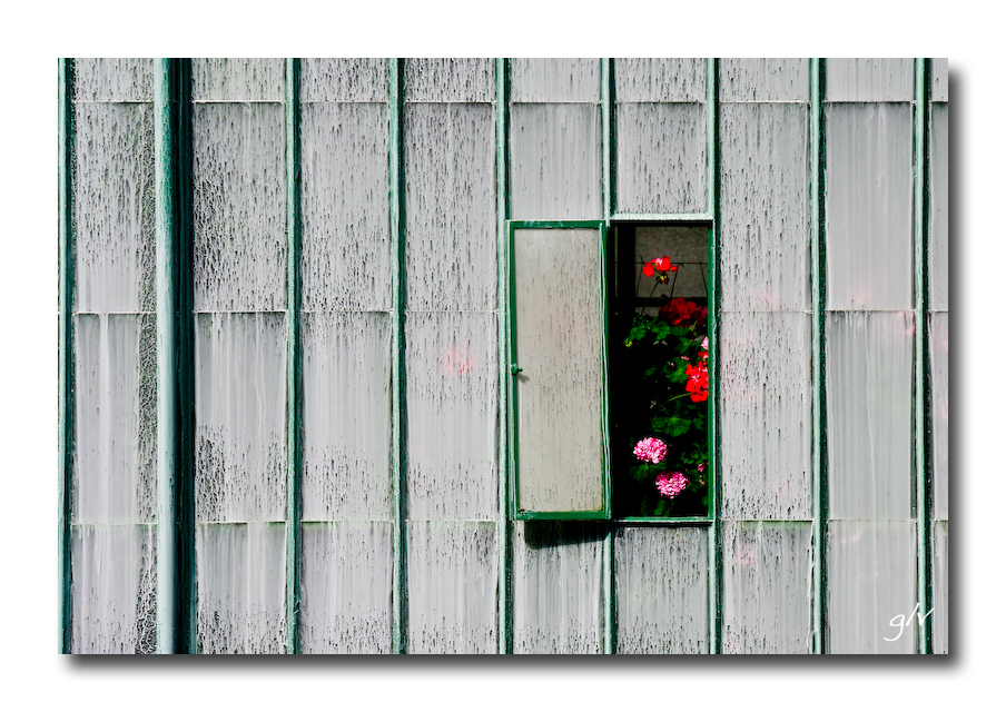 Fenêtres (25)