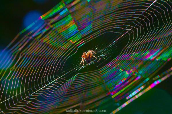 Funkadelic Spider