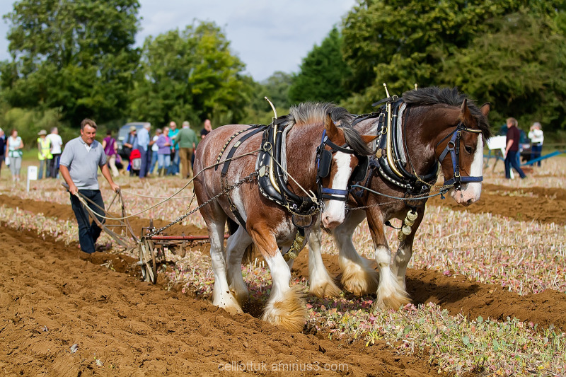 Ploughing-the old way