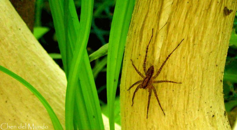 spider on a mushroom stalk