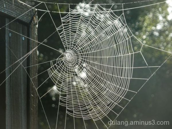 miraculous spider web