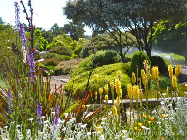 Mendocino Botanical Gardens #2