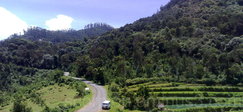 Kodaikanal Hills,  a trap for the unwary...