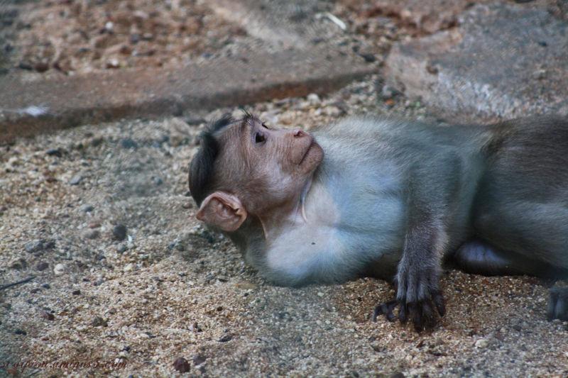 ST Monkey