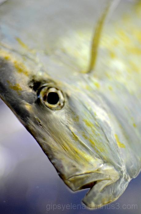 Visit at the Aquarium VI