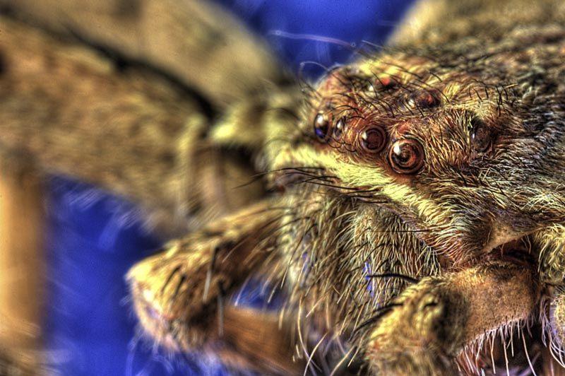 hdr macro spider cuba