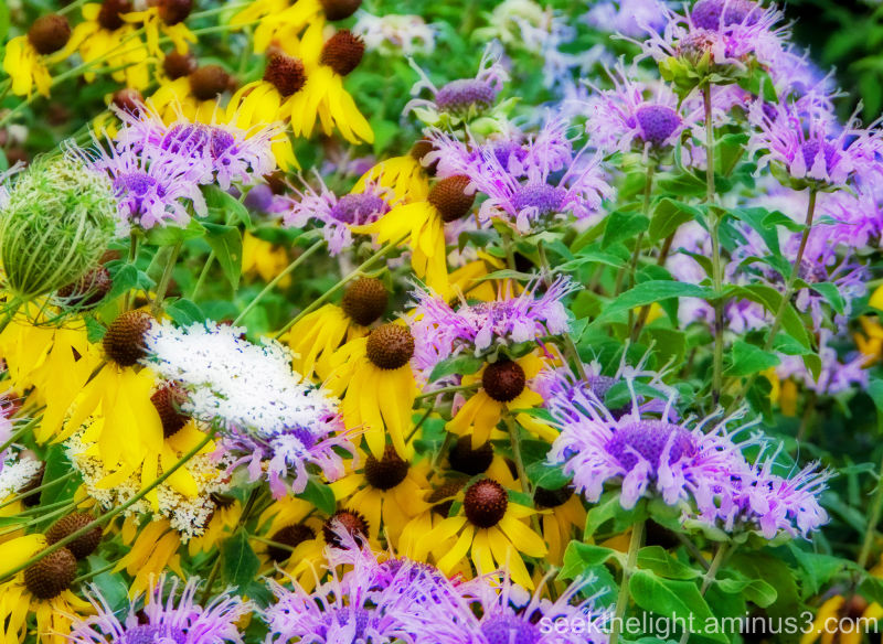 Yellows & Violets II