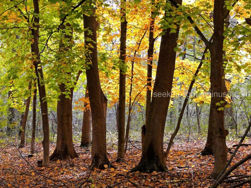 Fabulous Fall Forest #2