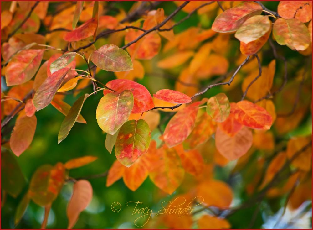 Colorrific!