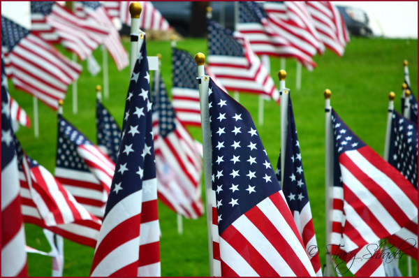 Memorial Day - Field of Honor #2