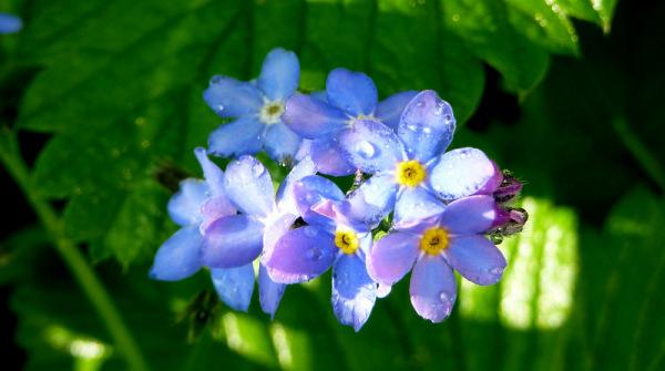 bleu poésie