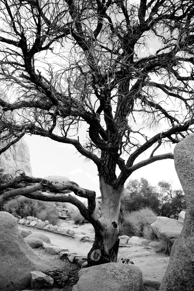 Joshua Tree National Park VII
