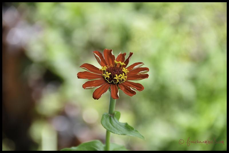 Clueless Flower