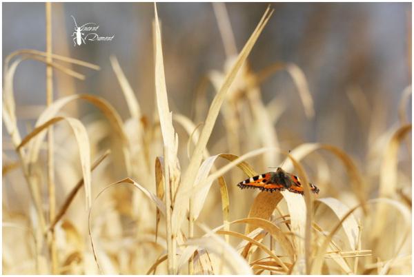 Retour des insectes