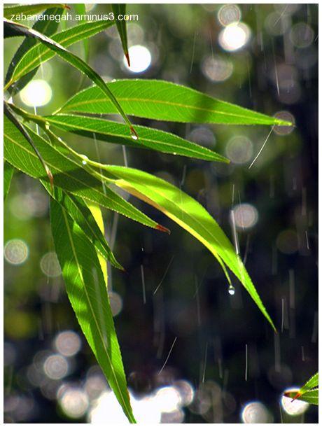 Life; drop rain is falling ...