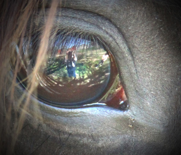 dont look a gift horse in the eye :)