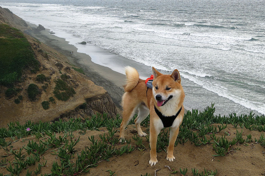 Fort Funston beach with Remus