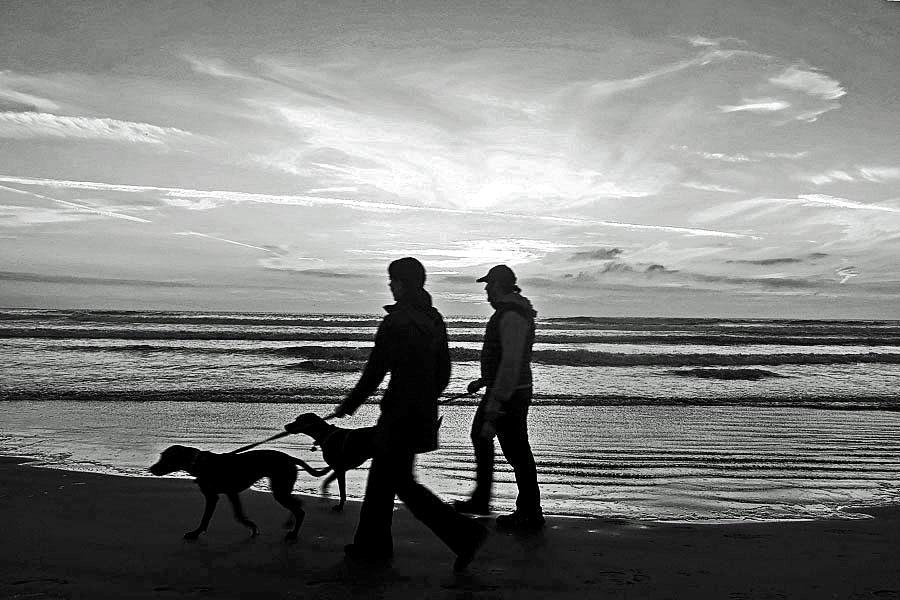 Walk Dog at late afternoon