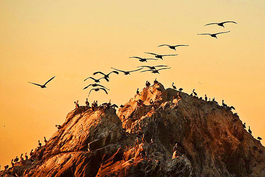 Seals Rock