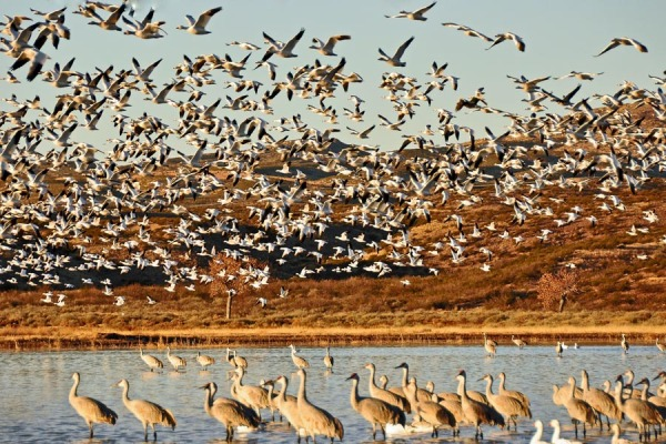 Sky Full of Wildlife