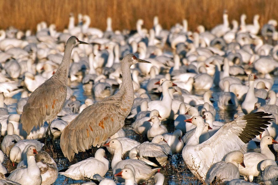 Birds of Wildlife