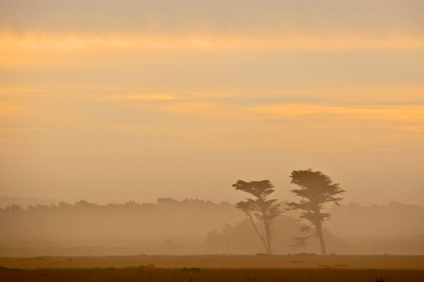 Dawn in Mist