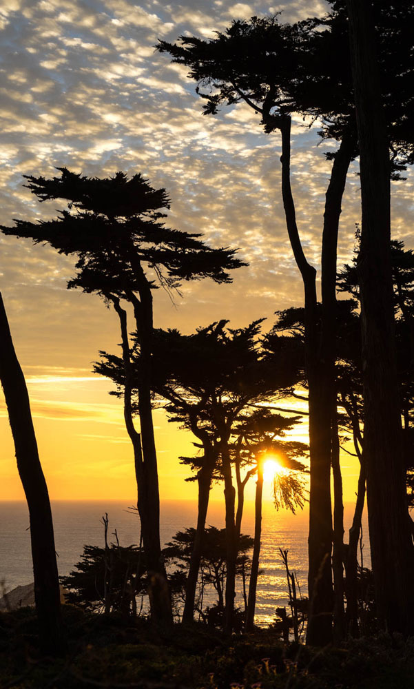 Sun across trees