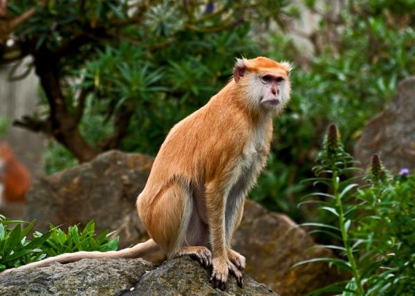 Happy Golden Monkey Lunar New Year !