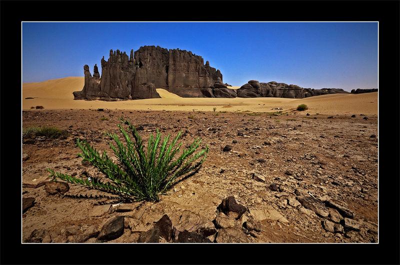 Tassili du Hoggar,Algeria