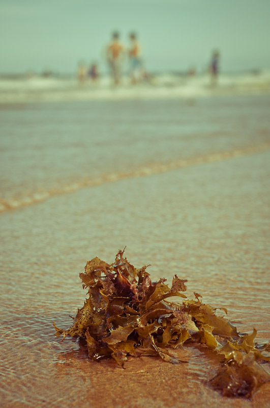 Seaweed at the beach