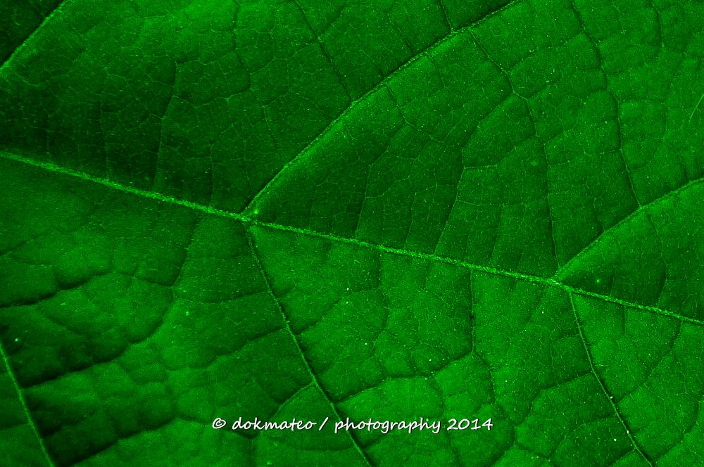 Green Leafy