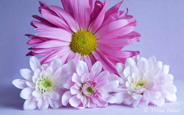 Flower study III