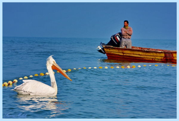 Fishing in the Caspian Sea in northern Iran.