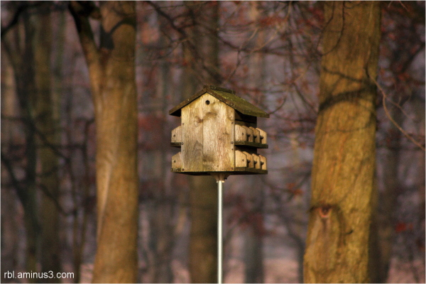 Birdhouse in the Woods