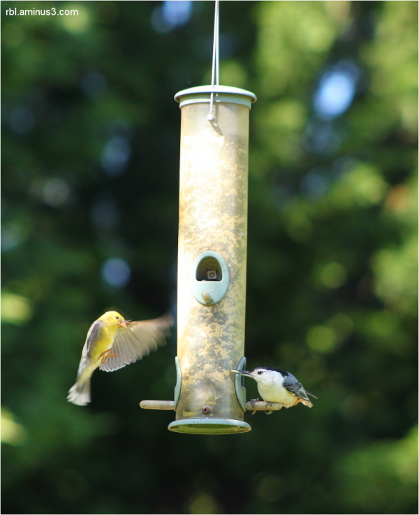 birds at bird feeder