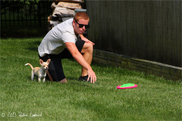 frisbee toss with chihuahua