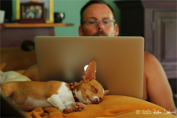 chihuahua laptop man