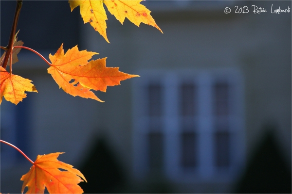 autumn leaves and house