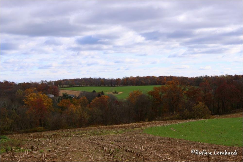 landscape fall foliage oxford pa
