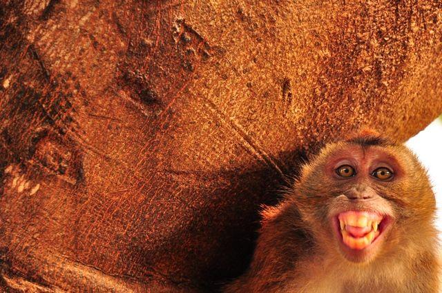 Monkey Business!!!
